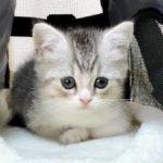 もちまる日記、もちまるとは?人気の癒し系猫YouTube動画!